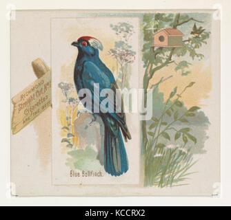 Bouvreuil bleu, du chant des oiseaux de la série mondiale (N42) pour Allen & Ginter Cigarettes, 1890 Banque D'Images