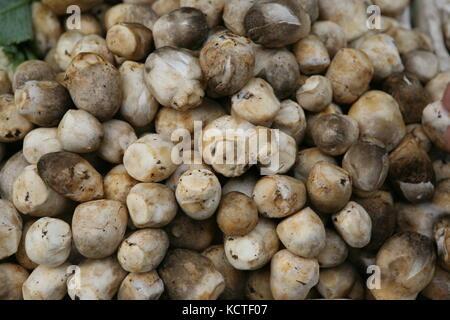 Asiatische pilze - strohpilz hed fang Banque D'Images