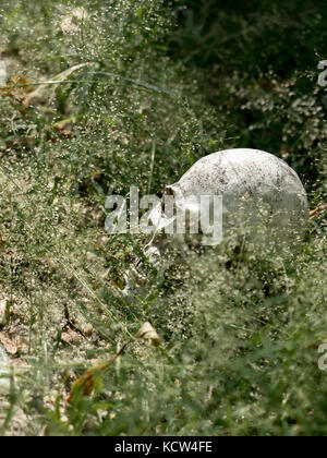 À côté du crâne humain enterré dans le sol avec l'herbe verte. Le crâne a joint la saleté au crâne.concept de la Banque D'Images