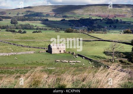 Moutons paissent près d'une ancienne grange sur le terrain près de Hawes dans Wensleydale, Yorkshire Dales National Park, Royaume-Uni