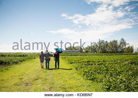 Les agriculteurs à marcher le long des cultures vert sur sunny farm Banque D'Images