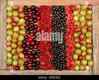 Collection d'une variété de fruits (groseilles, framboises, groseilles, prunes) sur fond de bois. La vue de dessus. Banque D'Images