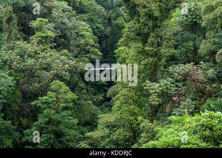 Forêt tropicale au Costa Rica avec pont suspendu Banque D'Images