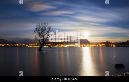 Lake Wanaka, otago, île du Sud, Nouvelle-Zélande avec l 'willow' lonely tree. Son déplacement célèbres lacs de l'île Banque D'Images