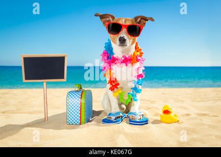 Jack Russell chien à la plage avec une valise ou un sac de bagages portant des lunettes de soleil et chaîne des Banque D'Images
