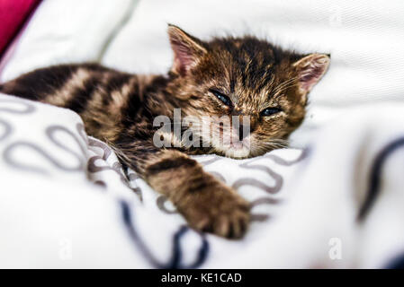 Un mignon petit chaton allongé dans une couverture à la maison.