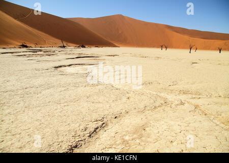 Pan de sel à deadvlei, Sossusvlei, Parc National Namib Naukluft, désert du namib, Namibie, Afrique.