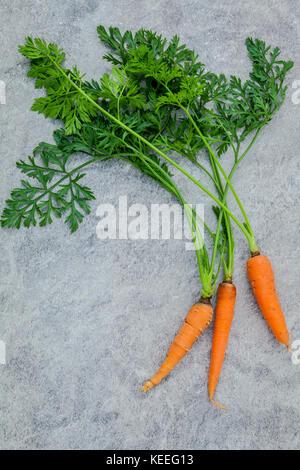 Carottes fraîches bouquet sur fond de béton foncé. raw carottes fraîches avec des queues. produits frais bio carottes Banque D'Images