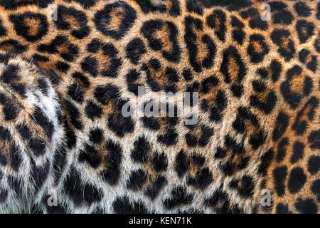 La texture peau de léopard pour le fond Banque D'Images