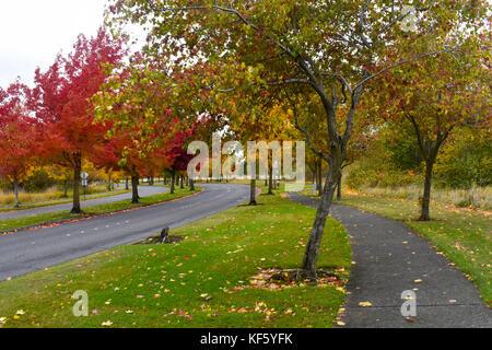 Chemin d'automne le long de la route avec des feuilles d'automne sur le sol et de beaux arbres colorés qui bordent Banque D'Images