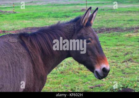 Un gros plan d'un âne à partir d'un profil latéral. Banque D'Images