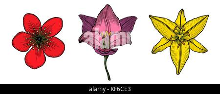 Vector Illustration Of Colorful King Protea Fleurs