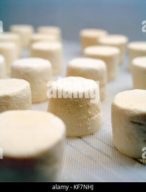 États-Unis, Californie, Petaluma, Goat's Milk Cheese séchage à Andante Dairy Banque D'Images
