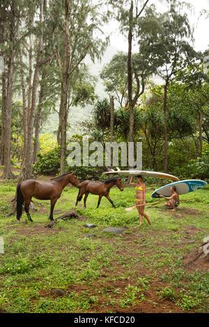 Usa, Hawaii, la grande île, paddle boarders et chevaux sauvages dans la vallée waipio