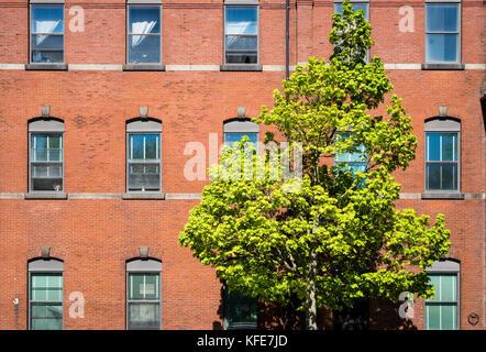 Un arbre isolé sur un trottoir situé dans un bâtiment en brique. Banque D'Images