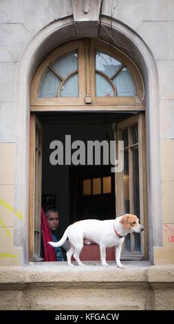 N blanc avec les oreilles marron debout sur la pierre blanche à rebord de fenêtre en bas de la rue avec le propriétaire Banque D'Images