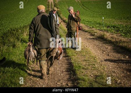 Représentant l'exécution shot faisans sur l'analyse par jour, Hampshire, Angleterre. Banque D'Images