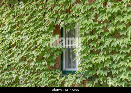 Détail d'une fenêtre encadrée de feuilles vertes dans le village autrichien de Hallstatt, Autriche supérieure, région Banque D'Images
