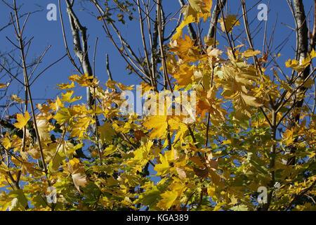 Temps d'automne dans le Merseyside Banque D'Images