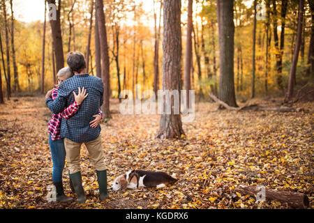 Couple avec chien en promenade dans une forêt d'automne.