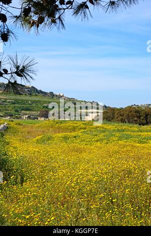 Vue sur Champs et prairies vers mosta, de Malte, de l'Europe.