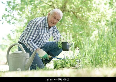 Man la plantation de plantes aromatiques dans le jardin Banque D'Images