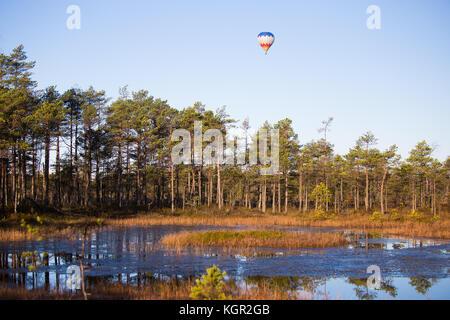 Une belle colorful hot air ballon survolant la zone humide des marais d'automne ensoleillé. paysage en matinée avec Banque D'Images
