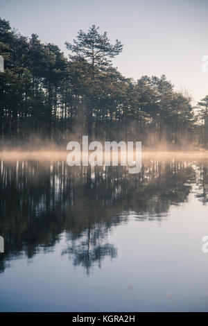 Un bel étang marécageux avec un brouillard d'élever pendant le lever du soleil. dans un bourbier frowen wetlands Banque D'Images