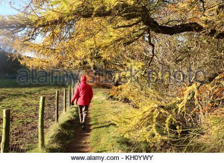 Holwick, Middleton-in-Teesdale, Co Durham, Royaume-Uni 12 novembre 2017 une femme marche sur le Pennine Way où les Banque D'Images
