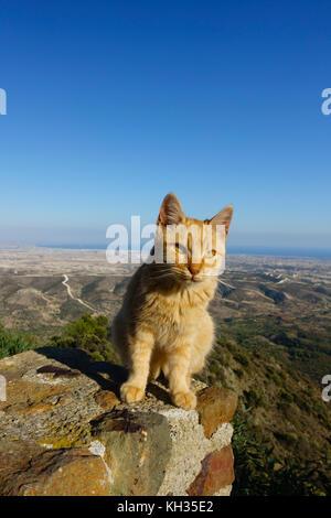 Le gingembre cat assis sur le mur donnant sur le Monastère de Stavrovouni à Larnaca, Chypre.
