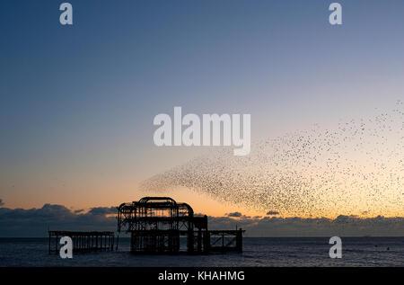 Murmuration sur les ruines de la West Pier de Brighton sur la côte sud de l'angleterre. un troupeau étourneaux effectuer acrobaties aériennes sur la jetée au coucher du soleil.