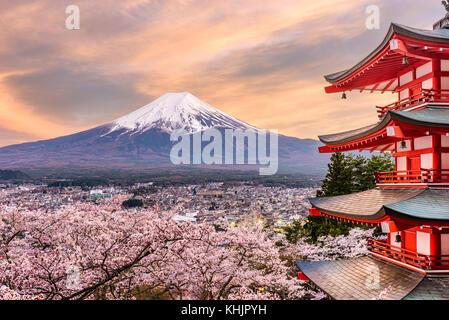 Fujiyoshida, japon à chureito pagoda et mt fuji. au printemps avec les cerisiers en fleurs. Banque D'Images