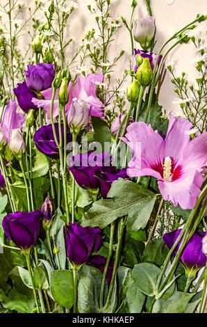 Fowers de nuances de pourpre et de l'hibiscus blanc lisianthus encadrée de petites fleurs de Grand Gaube Banque D'Images
