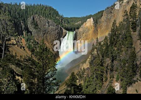 Wy02628-00...wyoming - rainbow au Lower Falls de red rock point dans le grand canyon du Yellowstone Parc national Banque D'Images