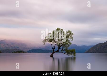 Une longue exposition de la Lone willow tree dans un lac à Wanaka, île du Sud, Nouvelle-Zélande Banque D'Images