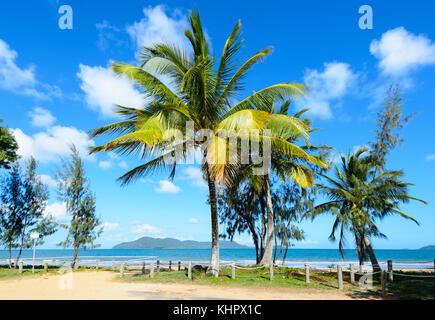Avis de bordées de palmiers exotiques Sud Mission Beach sur la mer de corail, l'extrême nord du Queensland, Australie, Banque D'Images