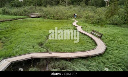 Vue d'un chemin en bois à travers un marais dans le sentier de la rive, Port Moody, le grand Vancouver, Colombie Banque D'Images