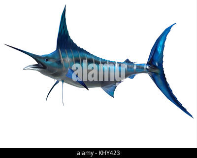 Poisson de sport - Le marlin Blue marlin est un poisson favori des pêcheurs sportifs et l'un des prédateurs de l'Atlantique Banque D'Images