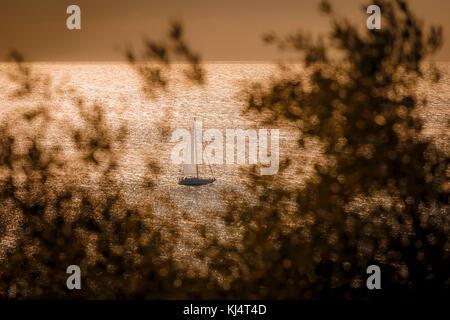 Voilier dans la mer étincelante encadrée par des branches d'oliviers floue. Banque D'Images