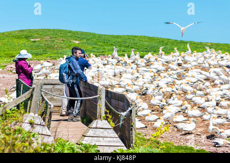 Percé, Canada - le 6 juin 2017: les gens sur l'affichage de l'observation des oiseaux pont Bassan colonie nichant Banque D'Images