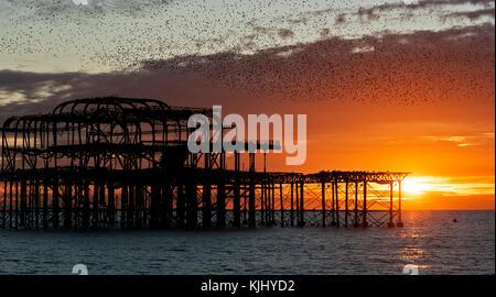 Murmuration sur les ruines de la West Pier de Brighton sur la côte sud de l'angleterre. d'une volée d'étourneaux se précipite sur le quai au coucher du soleil avant de se percher.
