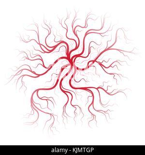 Les veines du sang humain Banque D'Images