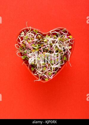 La germination des haricots dans un bol en forme de coeur sur fond rouge. Banque D'Images