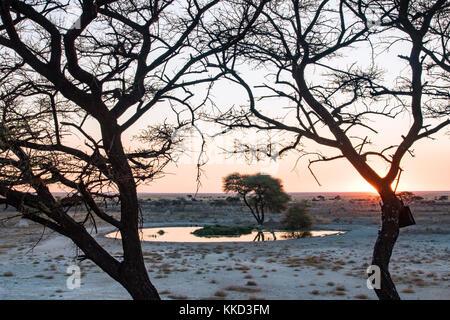 Point d'eau au coucher du soleil - onguma le fort, onguma game reserve, la Namibie, l'Afrique