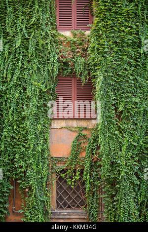 Les fenêtres et volets d'un immeuble résidentiel à Rome, Italie recouverte d'une végétation de type lierre plante. Banque D'Images