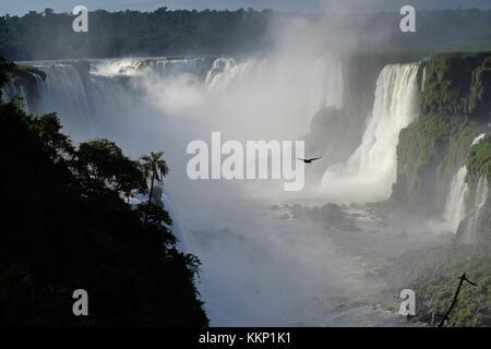 Vol d'oiseaux dans la Gorge du Diable, les chutes d'Iguaçu Brésil Banque D'Images