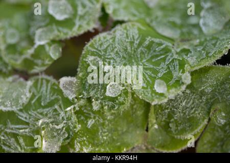 Les gouttelettes d'eau sur les feuilles des plantes vertes Banque D'Images