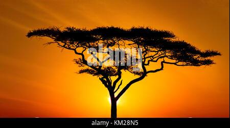 Silhouette d'un acacia au coucher du soleil, In Serengeti National Park, Tanzania, Africa