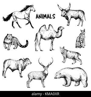 Ensemble de croquis dessinés à la main animaux style. vector illustration isolé sur fond blanc. Banque D'Images