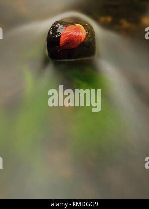 Red leaf de framboises. broken leaf orange rouge pris sur pierre noire dans le flux des rapides. lignes d'argent de bulles dans l'eau froide crée par long exposu